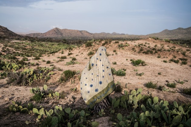 A woman walks through a cactus filed in a drought-stricken area western Somaliland. © Nichole Sobecki.