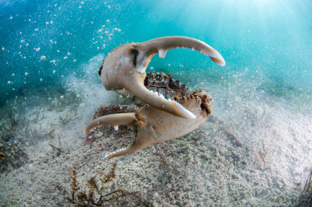 Photo tip of the week getting started with underwater photography this image of a cling crab demonstrates two underwater photography techniques the first being close publicscrutiny Image collections