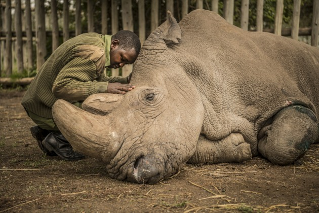 "© Ami Vitale. Joseph Wachira, 26, comforts Sudan, the last male Northern White Rhino on the planet, moments before he passed away at Ol Pejeta Conservancy in northern Kenya. ""My hope is that Sudan's legacy serves as a catalyst to awaken humanity to this reality,"" says Ami Vitale."