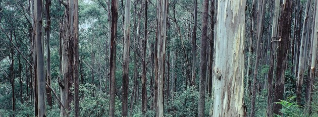 eucalypt-credit-bureau-of-rural-sciences.jpg