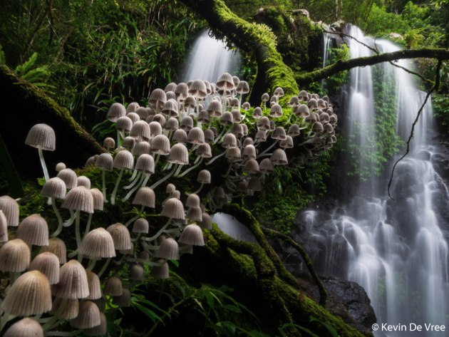 Winner: Enchanted Forest, Kevin De Vree (Belgium). Lamington National Park is a fairytale forest teeming with waterfalls, gigantic old trees and wildlife. Taking in all this magical beauty, I wondered when the ancient trees would start talking and if the fairies would appear. To me, this fungi stairway captures the magic of this century-old, semi- tropical forest.