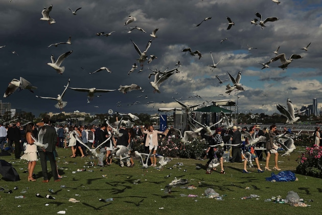 © Scott Barbour. Racegoers leave the course as seagulls hover overhead following 2016 Melbourne Cup Day at Flemington Racecourse on November 1, 2016 in Melbourne, Australia.