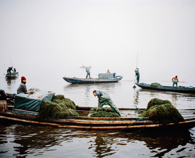 Boats trawling for seaweed and shrimp, Honghu, China, 2015.