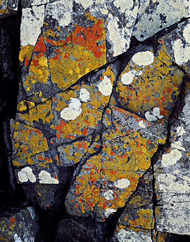 Shore Lichen on Granite, East Freycinet, Freycinet National Park, Tasmania, 1989.