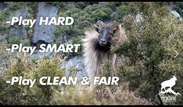 Play Hard Tahr