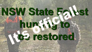 Katrina Hodgkinson has gazetted 358 NSW state forests for licensed volunteer hunting. It means hunters could be back on public land as early as December.