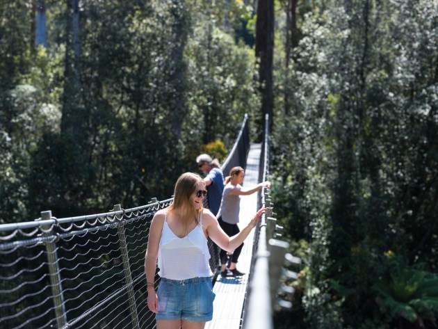 Swinging bridge walk, Tahune Adventures.