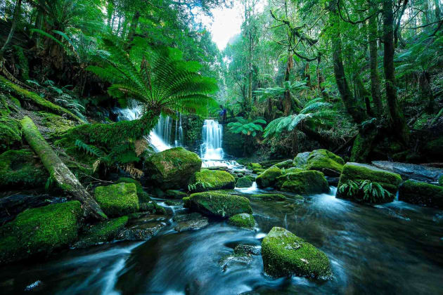 Mt. Field National Park is where Russell and Horseshoe Falls are located.