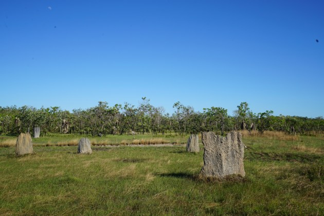 A field of magnetic termite mounds at Litchfield NP.