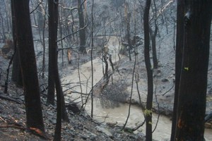 Impacts on waterways after bushfires