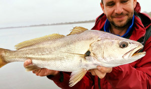 NSW DPI - Fisheries livestreaming event to unveil mulloway mysteries!