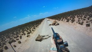 300,000 Feral Camels are Wreaking Havoc Across the Outback