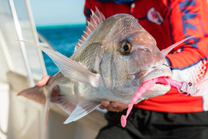 VIDEO: Halco's top snapper lures