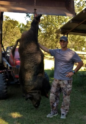 Texas Man Kills 188 kg Feral Hog Eating Fawns on His Land With an AR-15