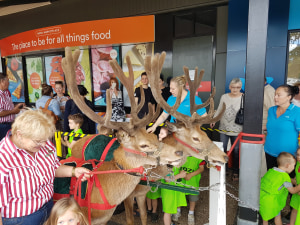 Santa's Red Deer Anger Animal Libbers