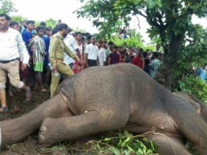 Hunter kills elephant that killed 15 people in India