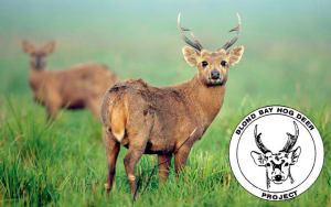 2017 Hog Deer Ballot Results