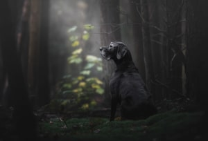 Dog Photographer of the Year comp opens for entries