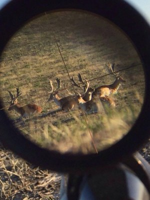 Farmers, Chefs And Shooters Have Joined To Lobby For Processing of Deer