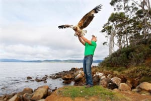 $12000 Reward for Shot Gunned Wedge-tailed Eagle