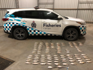 Two cars seized, four men apprehended in undersize snapper haul