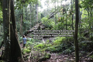 NSW and Victorian State Forest and National Park Camping Closure