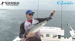 VIDEO: Catching and rigging live baits for mackerel