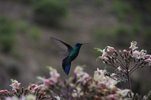 Peruvian honey eater snap takes out Nov comp