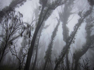 Image Doctor: Mist in the Western Budawangs