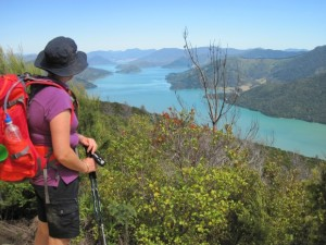 Queen Charlotte Track offers miles and smiles