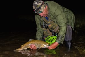 Catching lake trout at night on fly
