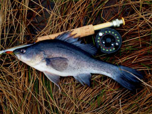 REVIEW: Vale Creek Rod Works 4wt three piece fibreglass rod