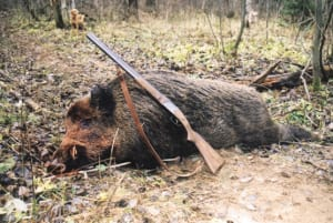 European Wild Boar The Real Deal