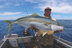 Kingfish of Victoria