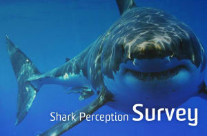 Have your say on sharks