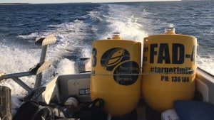 Fish aggregating devices return to Torquay for summer