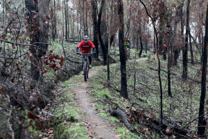 Mountain Biking in Yackandandah