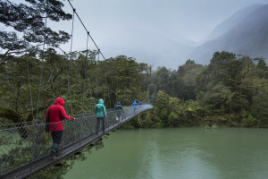 Win a guided walk on the Hollyford Track!