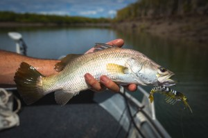 "Daly River research: ""lowest catch on record"" for juvenile barramundi"