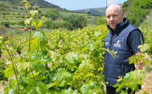 Researchers to trial Cypriot vines in Aussie drought