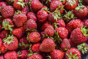 Costa adopts AI across berry farms