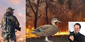 Anti Hunting MP's Try to Leverage Bush-fires to Push Their Duck Hunting Agenda
