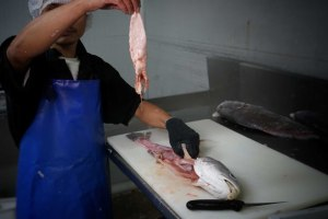 Illegal jewfish swim bladder trade forces tighter fishing rules