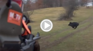 Wild Boar Fever - Sharp Shooting