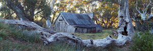 Experience the beauty of the Bogong High Plains