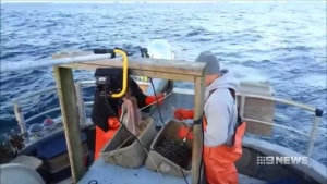 VIDEO: SA Govt to buy back commercial fishing licences