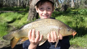 Research forms part of the National Carp Control Plan process