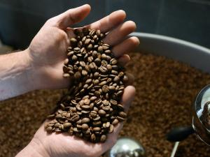 New coffee varieties for local growers