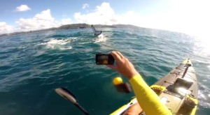 Video: Kayak fishing Coffs whale encounter