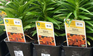 Orora Visual's plant tags open digital doors